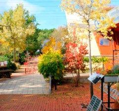 Pozuelo de Alarcón | El municipio recibe el otoño con un programa de actividades en el Aula de Educación Ambiental